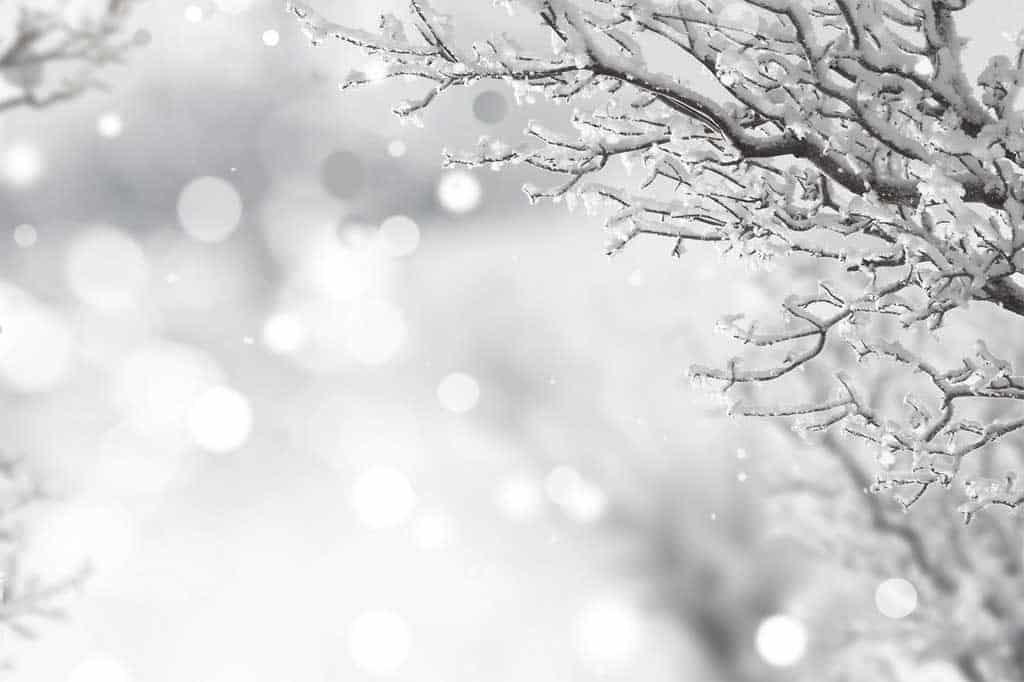 snefnug julepynt til træet
