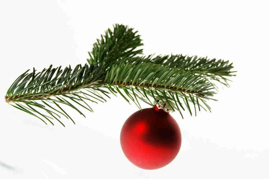 Sådan kan du holde dit juletræ frisk