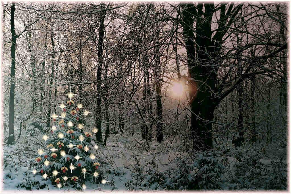 Kender du reglerne om at tage julepynt i skoven