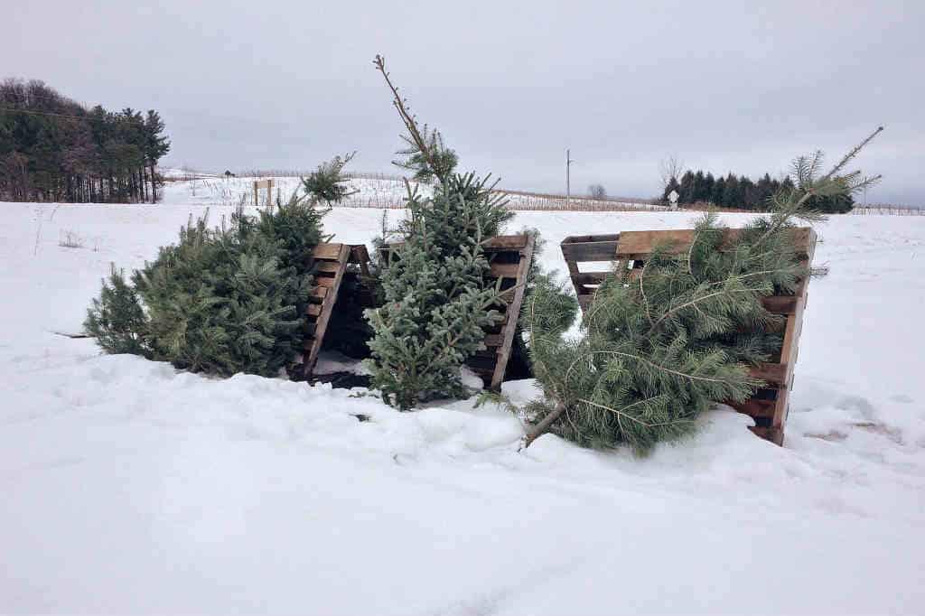 find det flot billig juletræ der kan komme med levering